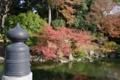京都新聞写真コンテスト 秋の九条池
