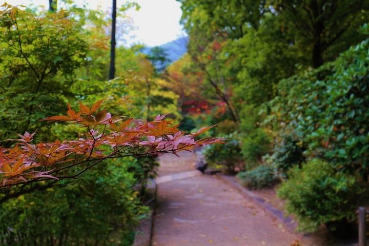 ミラーレス一眼・秋を撮影