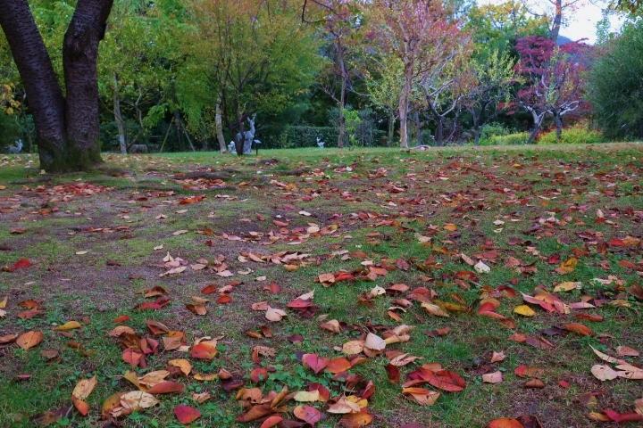 CANON ミラーレスで秋風景