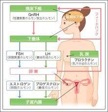 f:id:sohachiacupuncture:20180622100945j:plain