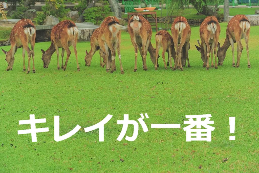 お尻を自慢する鹿たち