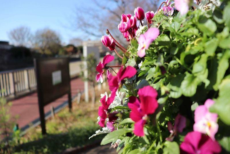 世田谷区野川の花