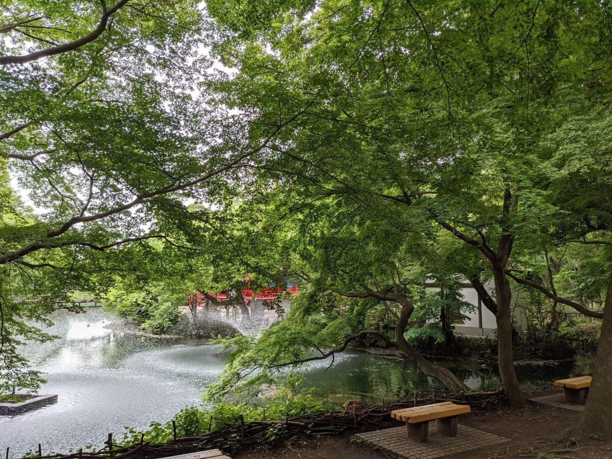 井の頭公園の風景
