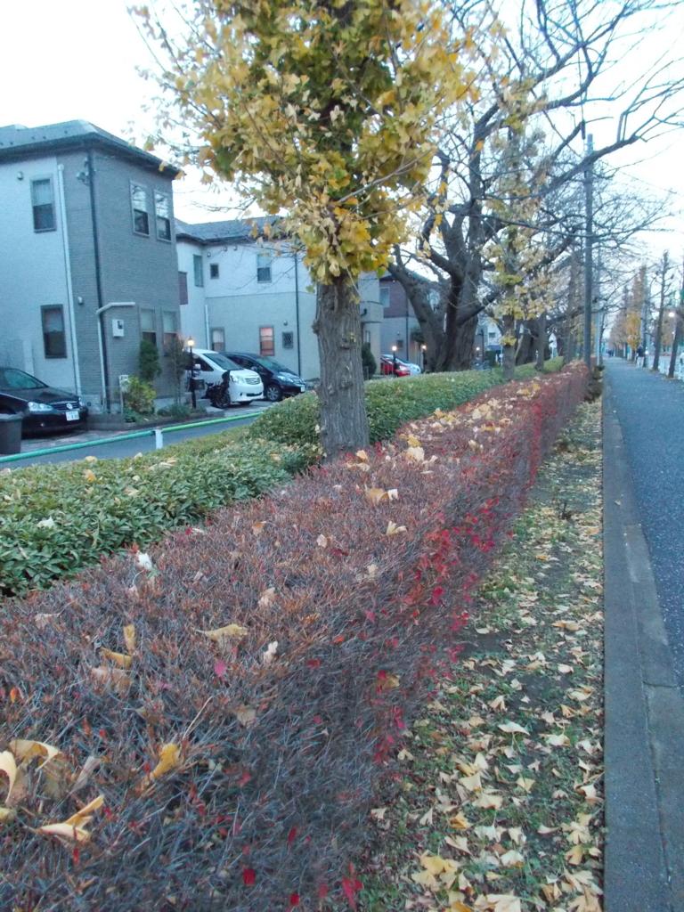 f:id:sokotujii:20161212162948j:plain