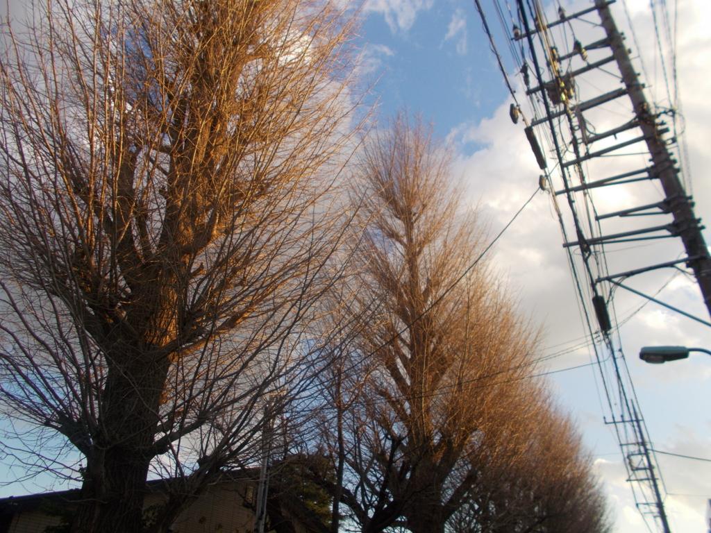 f:id:sokotujii:20170113161859j:plain