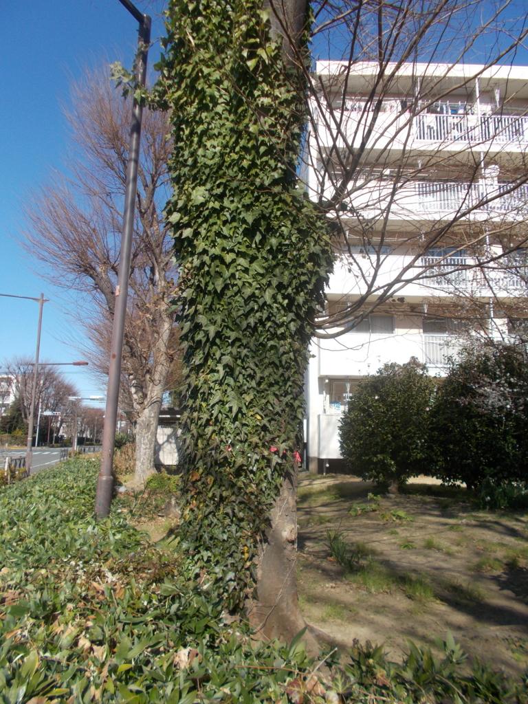 f:id:sokotujii:20170131122550j:plain