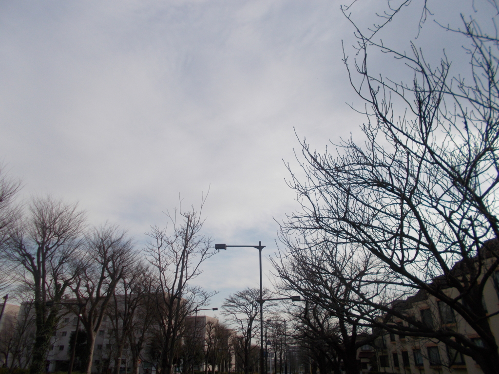 f:id:sokotujii:20170201151937j:plain