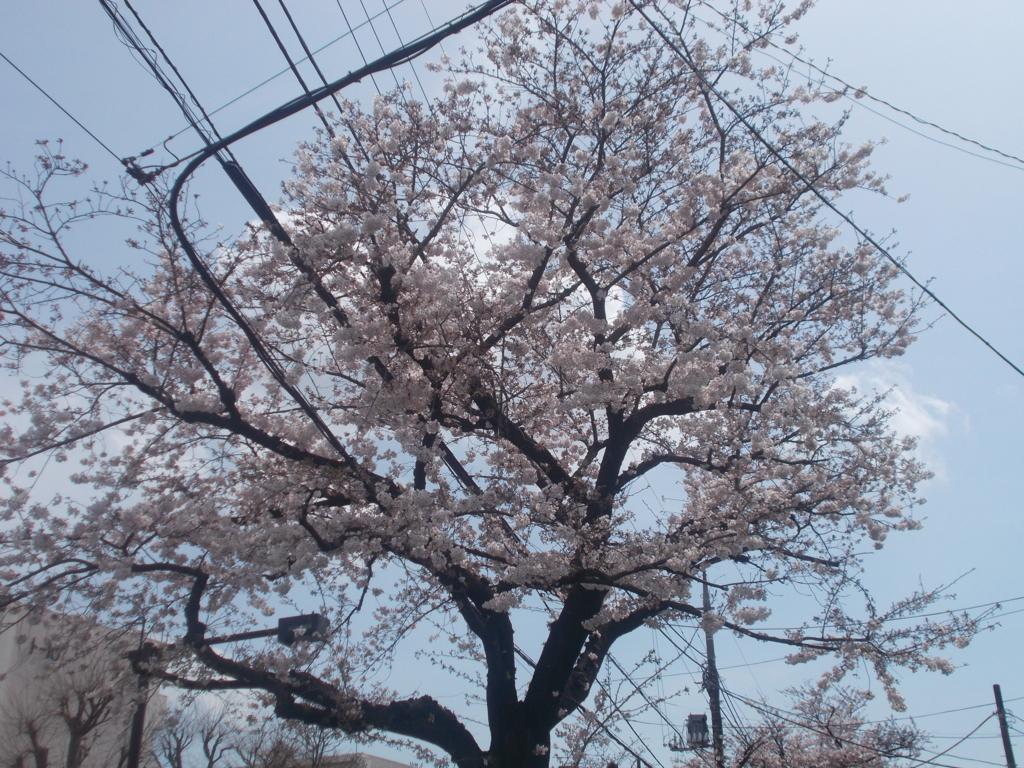 f:id:sokotujii:20170406123237j:plain
