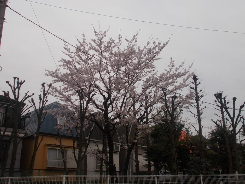 f:id:sokotujii:20170410173823j:plain