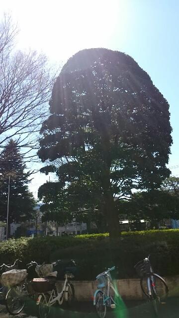 f:id:sokotujii:20180317221235j:image