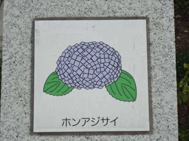 f:id:sokotujii:20180402144844j:plain