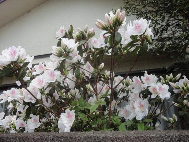 f:id:sokotujii:20180419120614j:plain