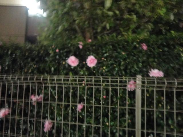 f:id:sokotujii:20181104183859j:plain