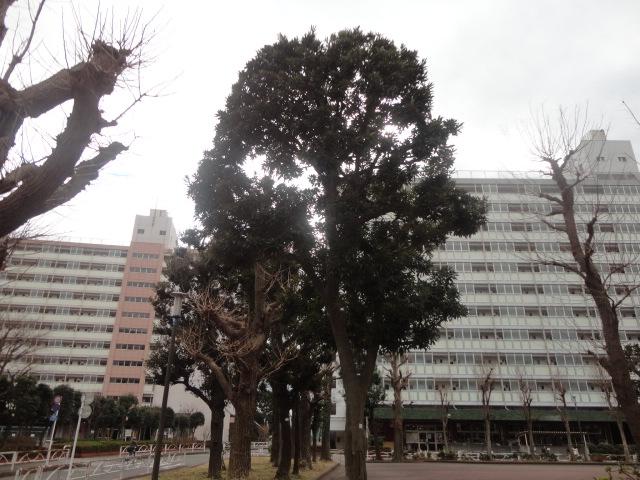 f:id:sokotujii:20190212124852j:plain