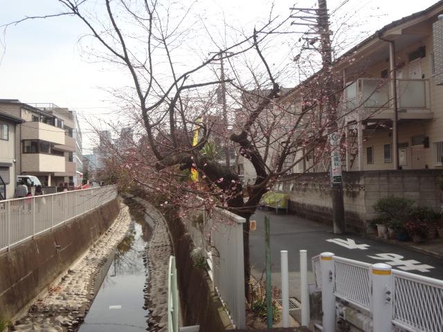 f:id:sokotujii:20190224120122j:plain
