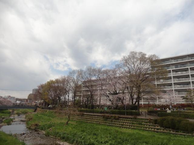 f:id:sokotujii:20190402121835j:plain