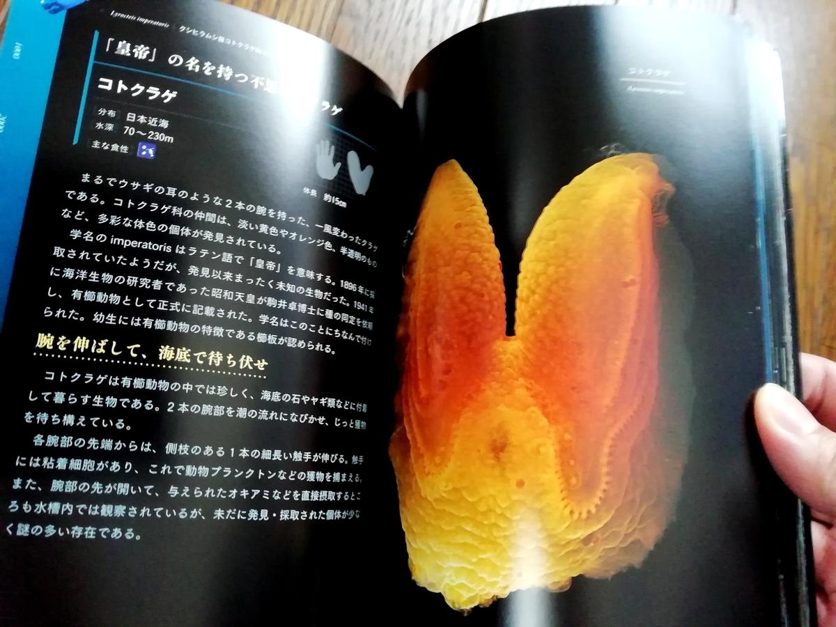 f:id:sola-chan:20201129141132j:plain