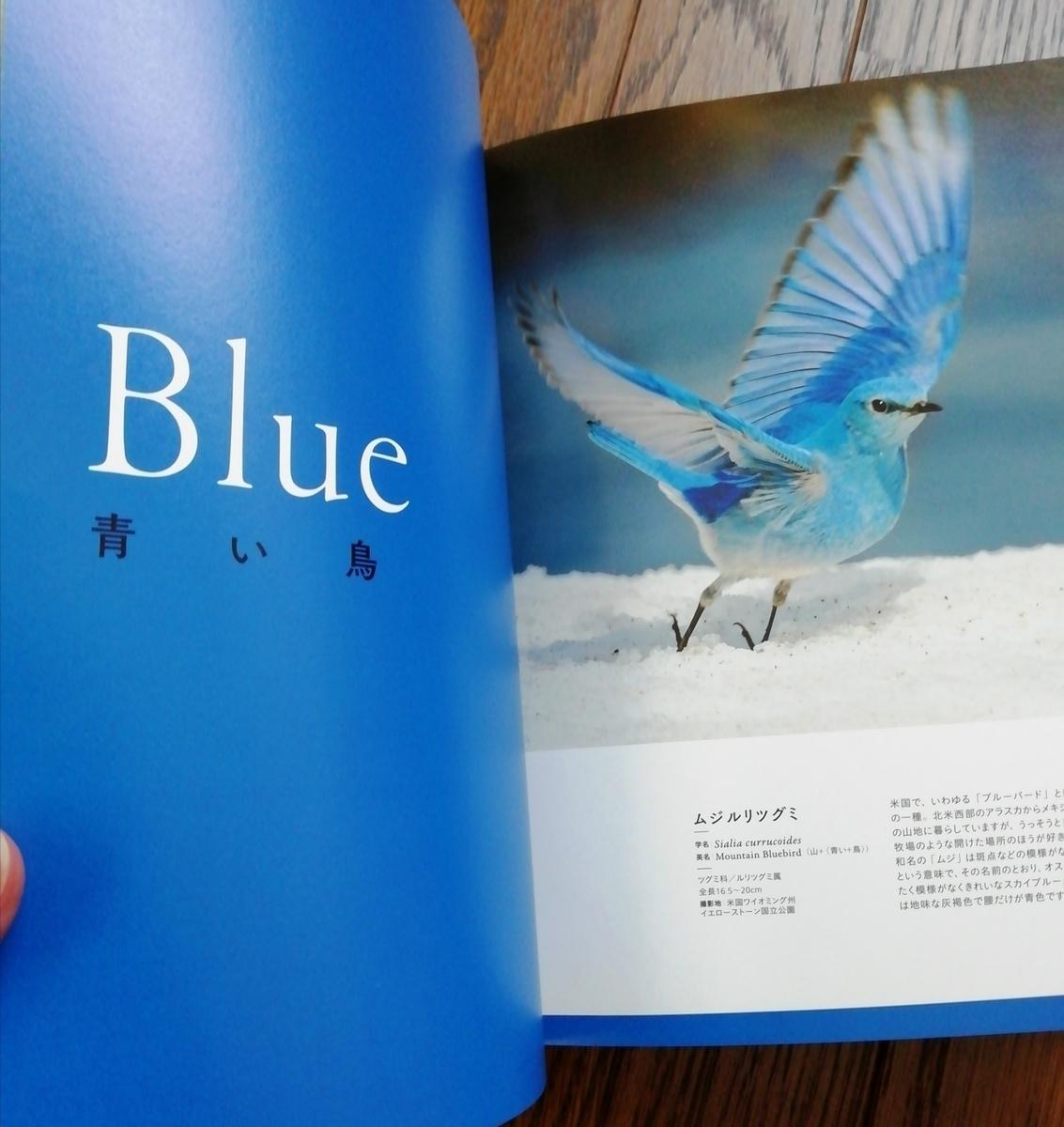 f:id:sola-chan:20201201151827j:plain