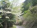 景色:桜を摘んだあたり