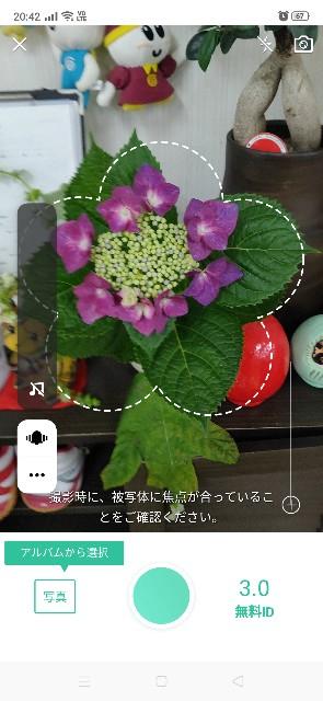 f:id:solahouse-meguri:20200608213331j:image