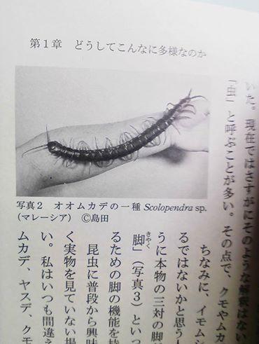 f:id:solidka2yuki:20170415054804j:plain