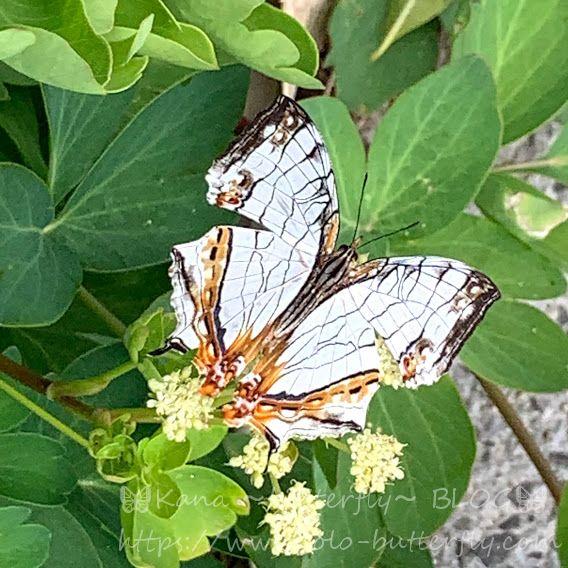 f:id:solo-butterfly:20210711183101j:plain