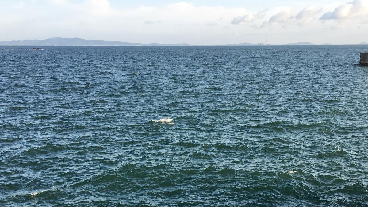 強風の時の、知多半島釣り三昧