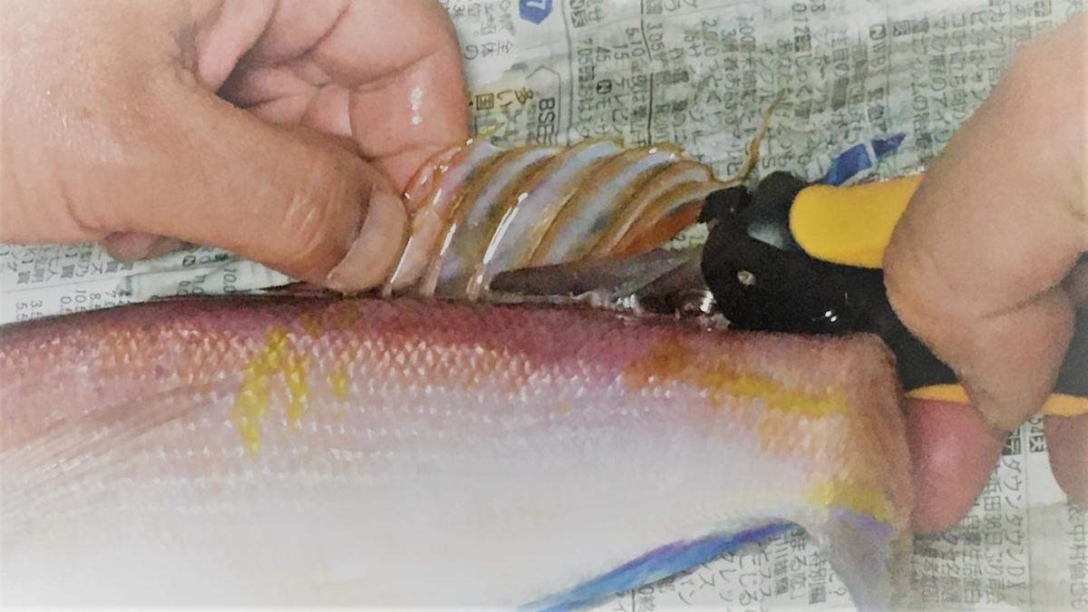 魚のヒレを切るなら万能ナイフが便利