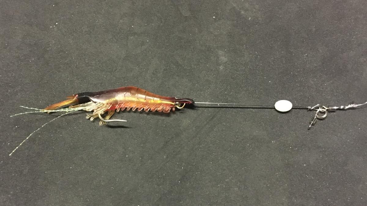 魚はエビが好き!?を若狭湾で調査