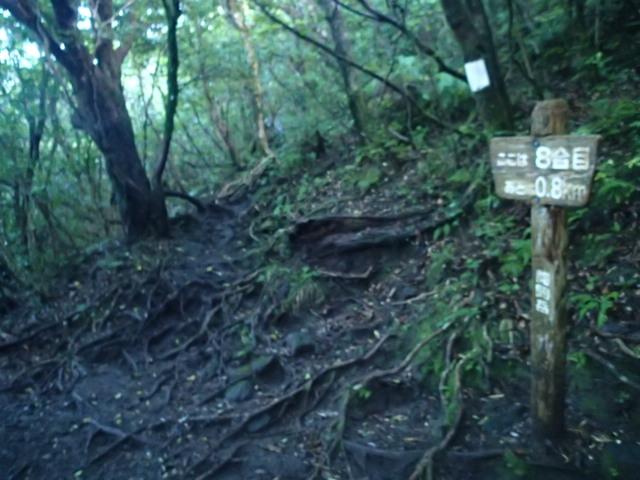 登山途中の写真13
