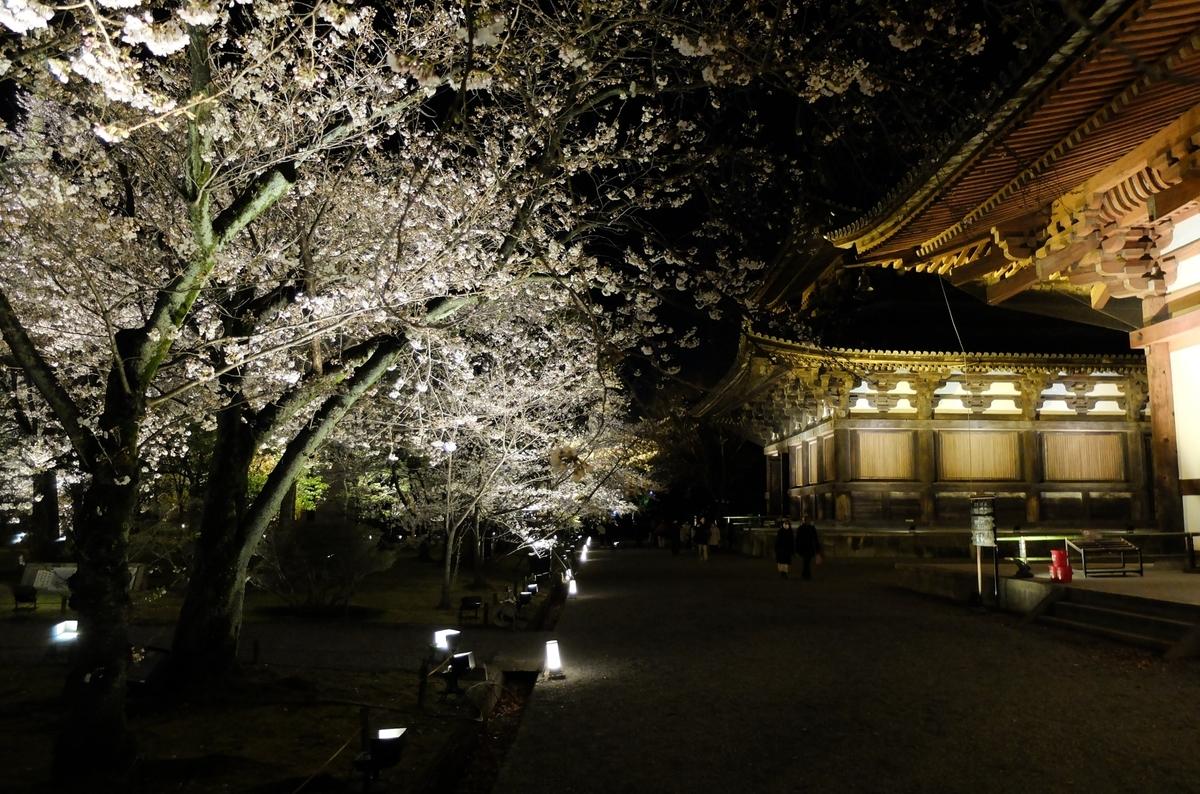 東寺 ライトアップ 金堂 講堂