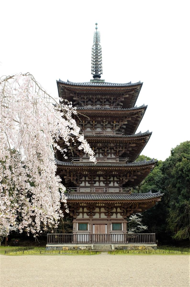 醍醐寺 桜 五重塔
