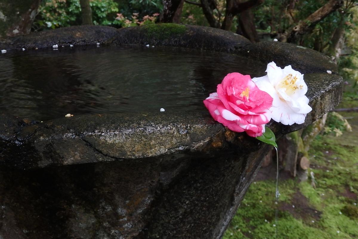 哲学の道 京都 花見 法然院