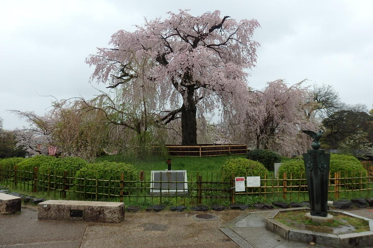 円山公園 京都