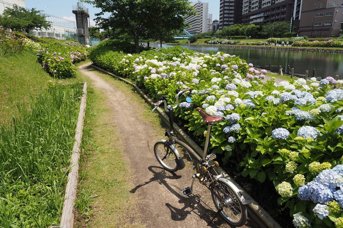 旧中川 紫陽花