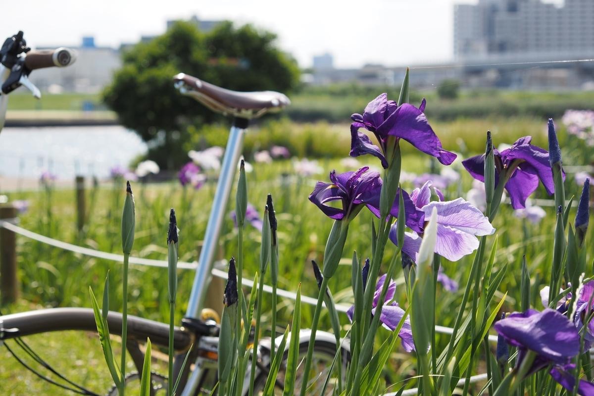 堀切水辺公園 菖蒲 荒川サイクリングロード