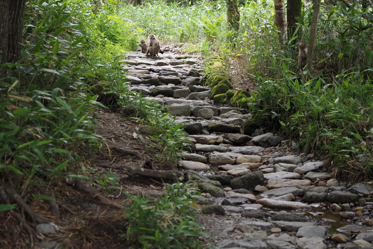 上高地 小梨平 ソロキャンプ 徒歩キャンプ 猿