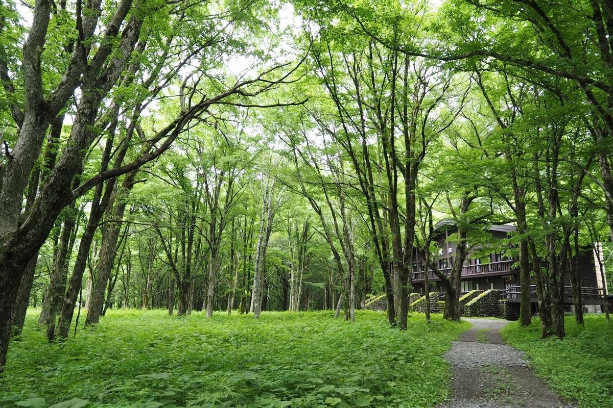上高地 小梨平 ソロキャンプ 徒歩キャンプ 徳沢ロッジ