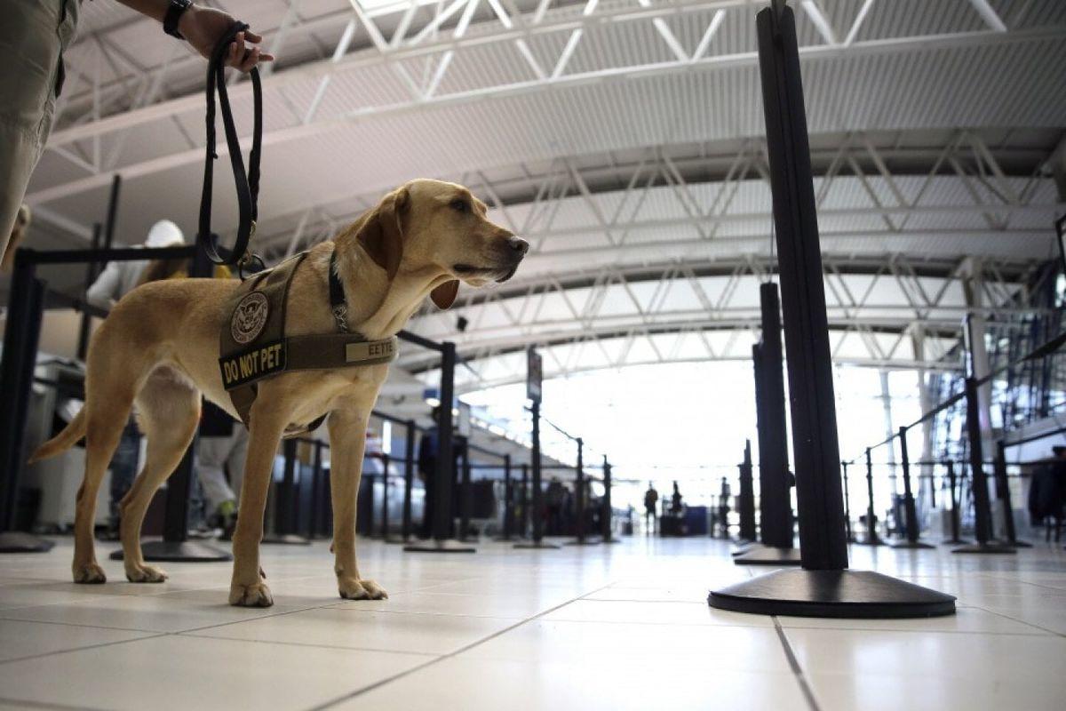 ロサンゼルス空港_探知犬による検査