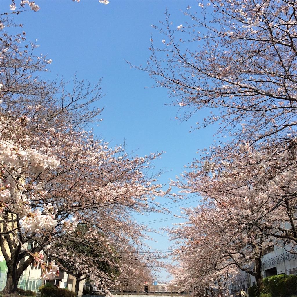 f:id:someiyoshino3939:20170405074350j:image
