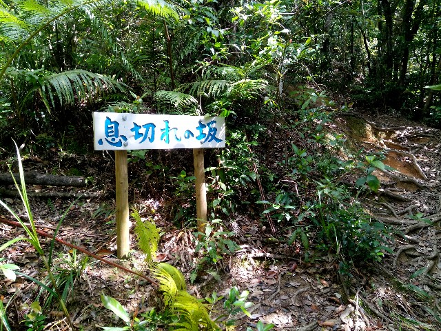f:id:somutamu_musume3:20200318132011j:image