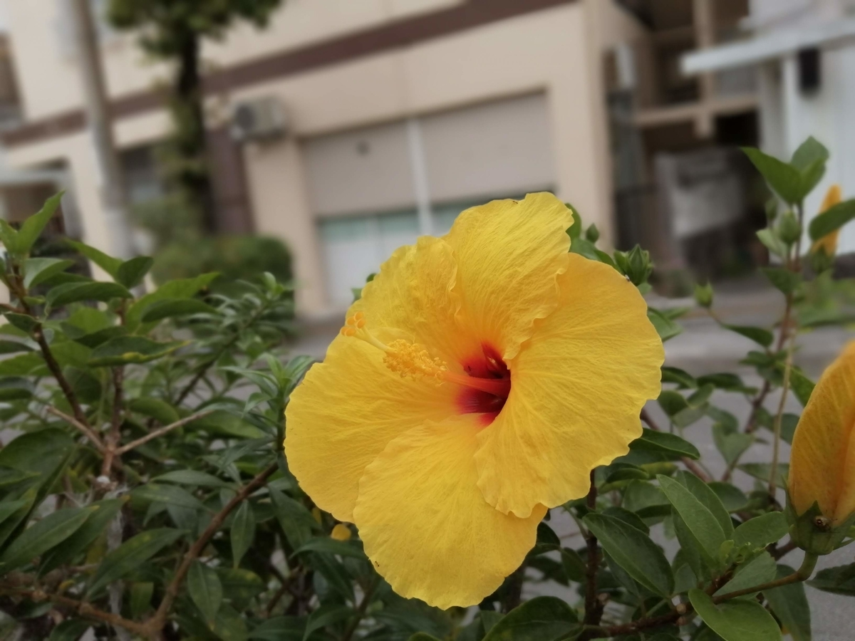 f:id:somutamu_musume3:20210419190102j:plain