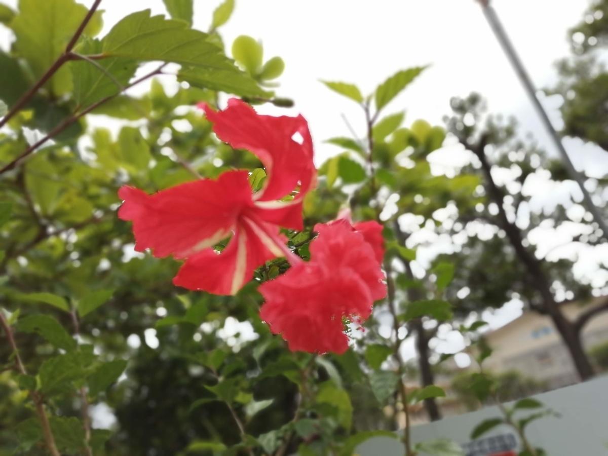 f:id:somutamu_musume3:20210419190145j:plain