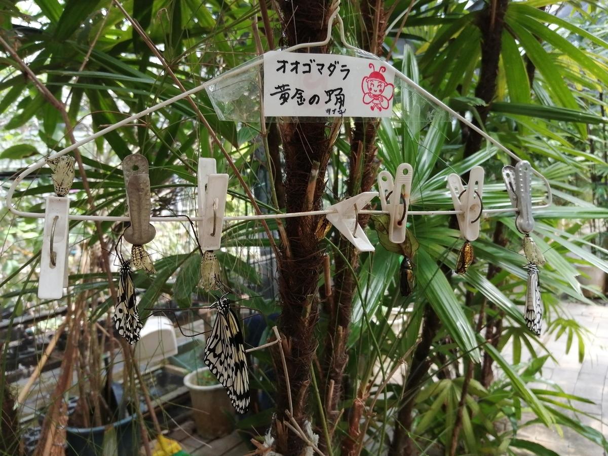 f:id:somutamu_musume3:20210506082508j:plain