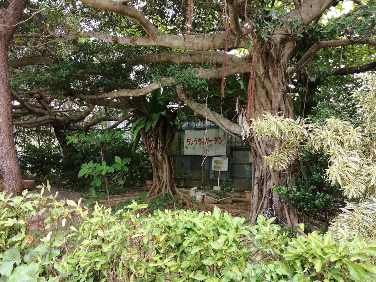 f:id:somutamu_musume3:20210507184100j:plain