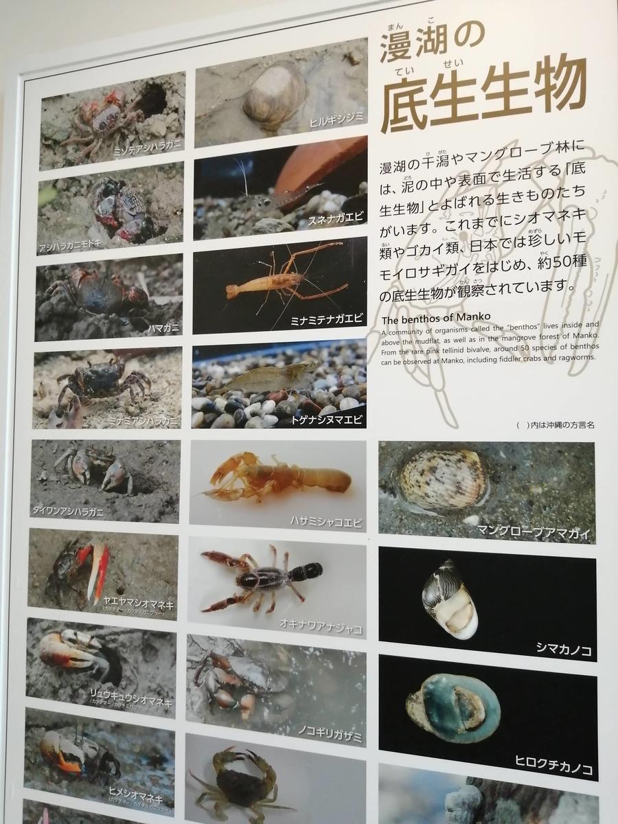 f:id:somutamu_musume3:20210513205630j:plain