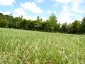青空と雲と草原。