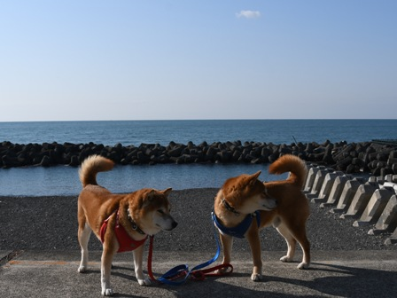 f:id:sonoyan_daikichi:20210411201627j:plain