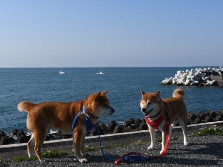 f:id:sonoyan_daikichi:20210411201719j:plain