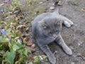 杖立薬師堂の猫